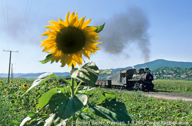 Sunflowers and steam in Huanan