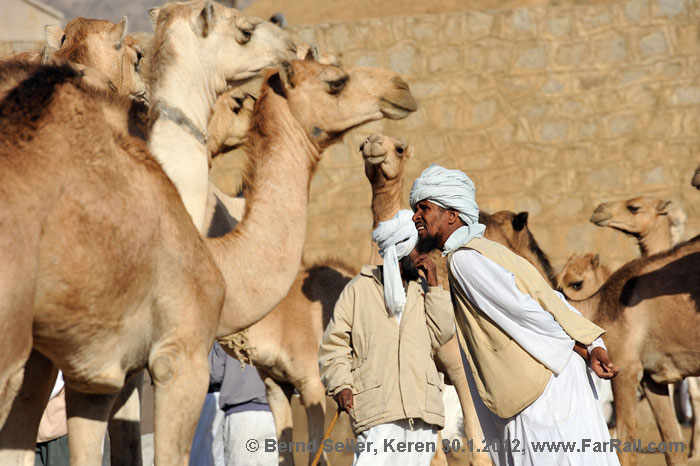 Keren: checking the camels